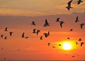 Birds flying in sunset — Stock Photo