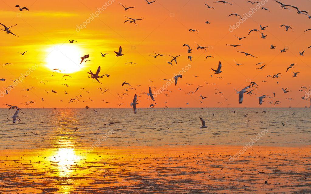 Birds Flying in The Sunset Birds Flying in Sunset Photo