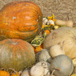 Multi colored pumpkins — Stock Photo