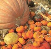 Multi colored pumpkins — Stock Photo