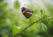 Butterfly perched on a leaf — Stock Photo