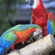 Macaw bird sitting on the timber — ストック写真