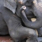 Schuss des Auges Elefanten hautnah — Stockfoto #25471441
