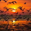 Silhouette of seagulls flying at sunset — Stockfoto