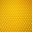 Honeycombs — Stock Photo #15784031