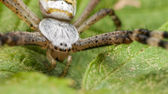 Big Spider With Black Eyes — Stock Photo