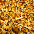 Chanterelle mushrooms background — Stock Photo