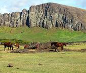 Vahşi atların düşmüş moai, paskalya adası otlatma — Stok fotoğraf