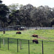 Stock Photo: Bison paddock in SFrancisco Golden Gate Park