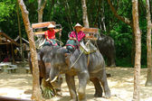 A mahouts in charge of elephants waiting for passengers at the Siam Safari Elephant Camp in Phuket, Thailand — Stock Photo