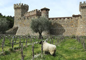 Castello di Amorosa Winery in Napa Valley. — Stock Photo