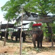 Elephant village near Bangkok, Thailand. — Stock Photo #27541409