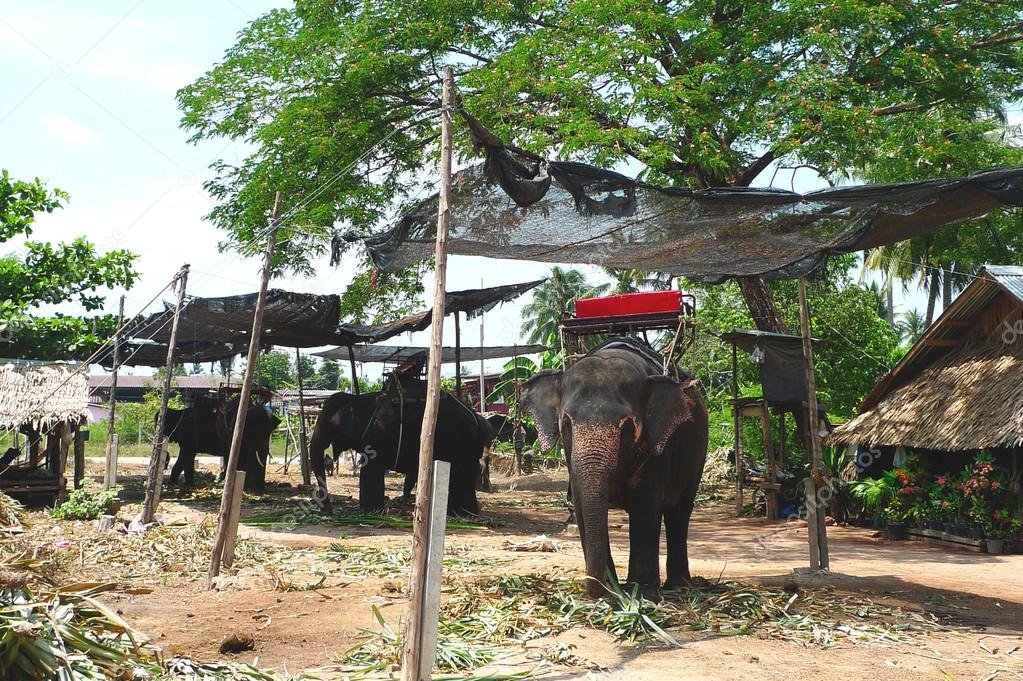 Thai Elephant Symbol Elephant Village Near Bangkok Thailand The Thai Elephant is The Symbol of