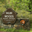 Muir Woods National monument — Stock Photo