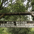 Muir Woods National monument in California — Stock Photo