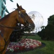 Stock Photo: NYPD police horse in front of 1964 New York World s Fair Unisphere in Flushing Meadows Park
