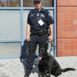 Stock Photo: NYPD transit bureau K-9 police officer and GermShepherd K-9 Taylor providing security at National Tennis Center during US Open 2013