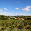 Typical landscape in Provence , France with vineyard and small village — Stock Photo