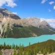 Aerial view of Peyto Lake in Banff National Park, Alberta, Canada — Stock Photo #50512525