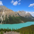 Aerial view of Peyto Lake in Banff National Park, Alberta, Canada — Stock Photo #50512573