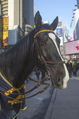 NYPD  horse on Times Square during Super Bowl XLVIII week in Manhattan — Stock Photo
