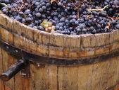 Harvesting grapes. — Stock Photo