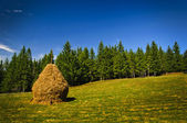 Landscape with hay stack — Stock Photo