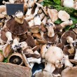 Market stand with fresh mushrooms — Stock Photo