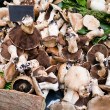Stock Photo: Market stand with fresh mushrooms