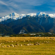 Panorama landscape with bucegi mountains — Stock Photo
