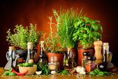 Herbs, spices and olive oil — Stock Photo
