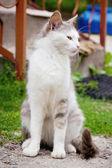 Gato na rua — Foto Stock
