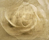 Rose vintage background — Stock Photo