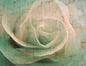 Rose vintage background — Stock Photo