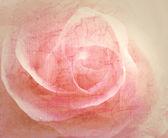 Rosa sfondo vintage — Foto Stock