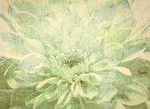 Fondo vintage flor blanca — Foto de Stock