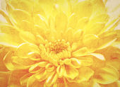 Orange flower vintage background — Stock Photo