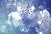 Dreamy flower background — Foto de Stock