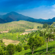 Landscape tea plantations, mountains and the river in India Kerala — Stock Photo