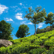 Stock Photo: Landscape of teplantations Kerala, Munnar