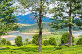 Beautiful landscape the mountain and the river in India Kerala — Foto de Stock