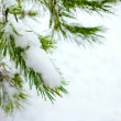 Christmas fir branch in winter forest — Stok Fotoğraf #25382585