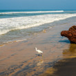Beautiful landscape of coast with white bird of Varkala. I — Stock Photo #28934885