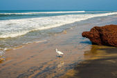 Beautiful landscape of the coast with a white bird of Varkala. I — Stock Photo