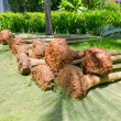 Stock Photo: Palm trees for landing with roots lie in park, closeup
