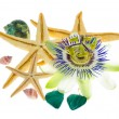 Tropical still life, the starfish, cockleshells, passionflower a — Stock Photo