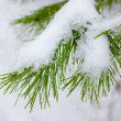 Christmas background with natural snow — Stock Photo