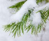 自然の雪とクリスマスの背景 — ストック写真