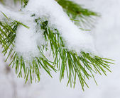 Christmas background with natural snow and drop — Stock Photo