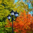 City lamp with a background from autumn leaves — Stok fotoğraf